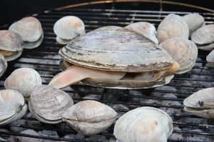 Grilling Clams - Grilled Clams